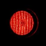 ミナミヌマエビは体調によって色が変化する?