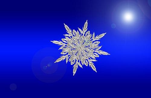 ミナミヌマエビ 越冬 室内 野外 方法