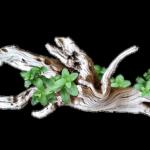 ミナミヌマエビの隠れ家を流木で自作するときのおすすめ