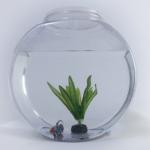 ミナミヌマエビを飼っている水槽を引っ越す方法